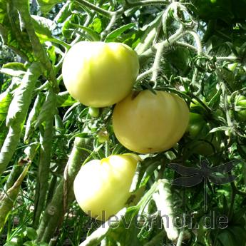 Gelbe un Weiße Tomatenfrucht