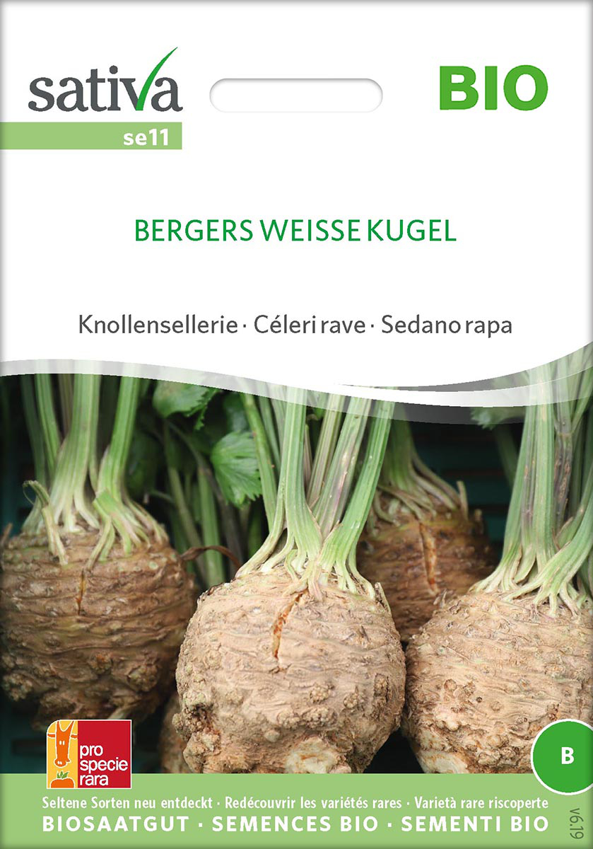 Saatgut Knollensellerie Bergers Weisse Kugel -S-