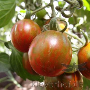 Braun gestreifte Tomatensorte mit gutem Geschmack