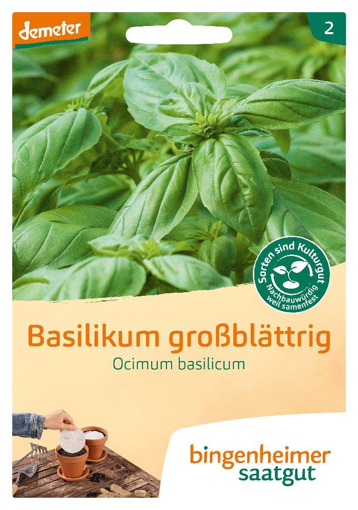 Basilikum grossblättrig -B-