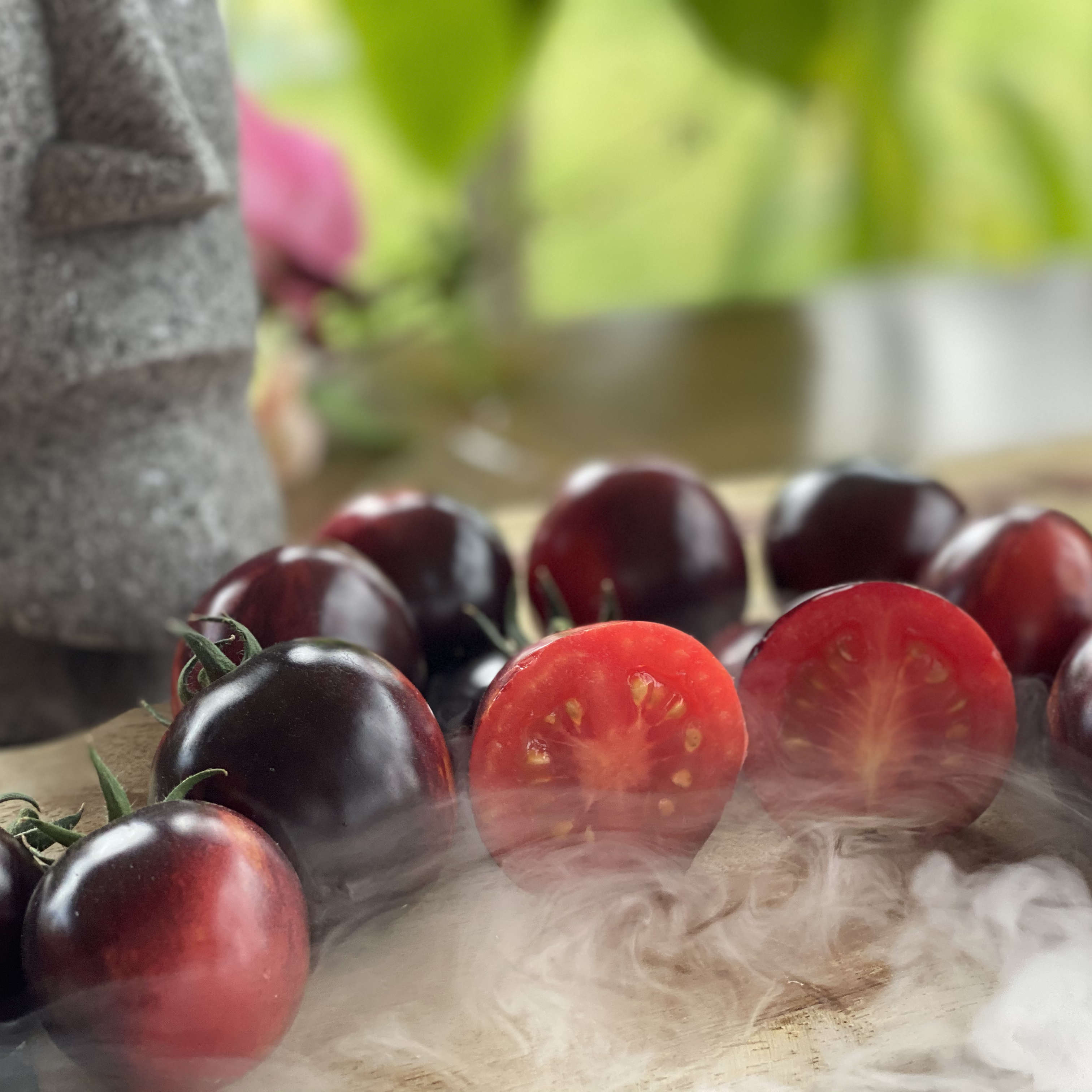 Tomatensaatgut Märchenglanz