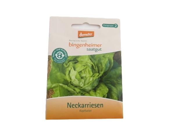 Kopfsalat Neckarriesen -B-