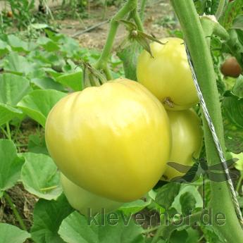 Weiß und Gelbe Tomatensorte in Herzform