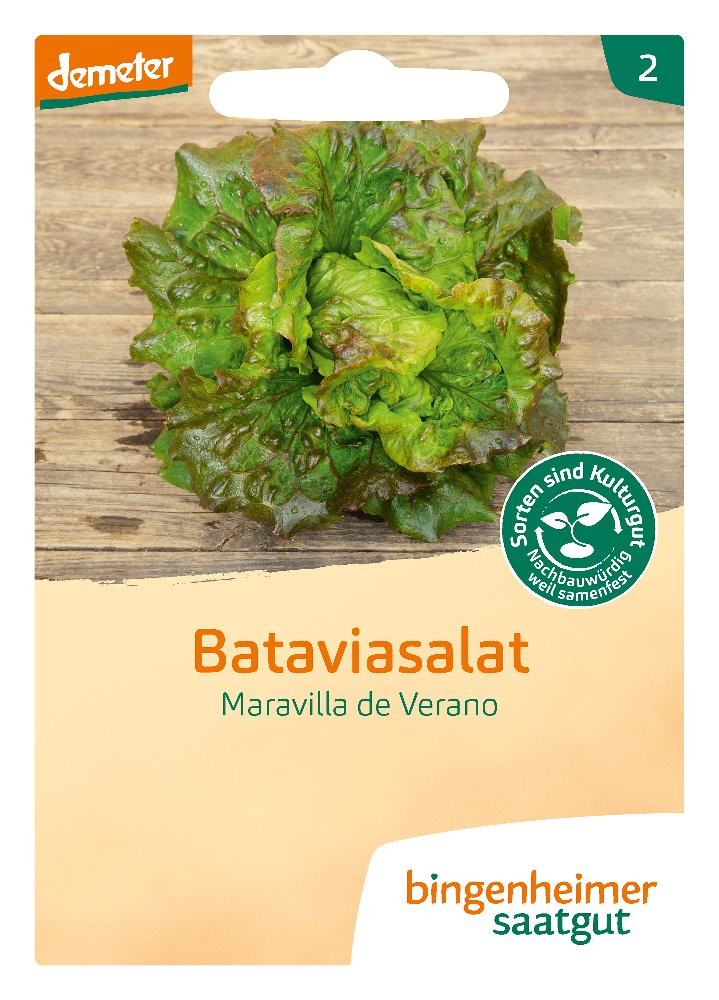 Saatgut Batavia Salat Maravilla Verano -B-