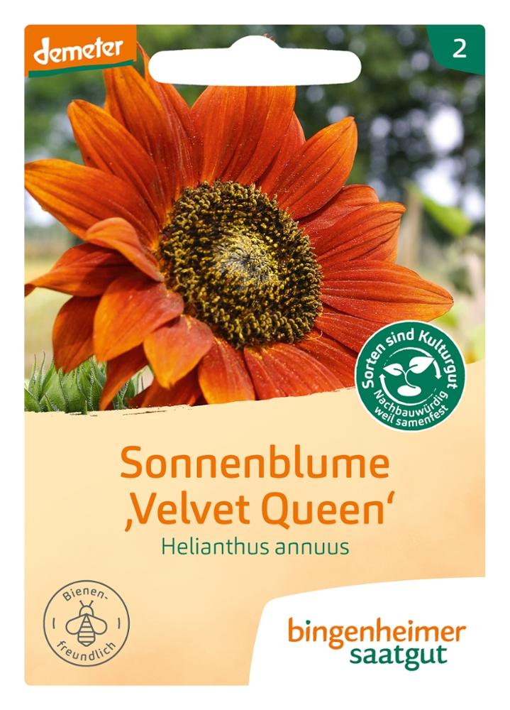 Saatgut Sonneblume Velvet Queen -B-