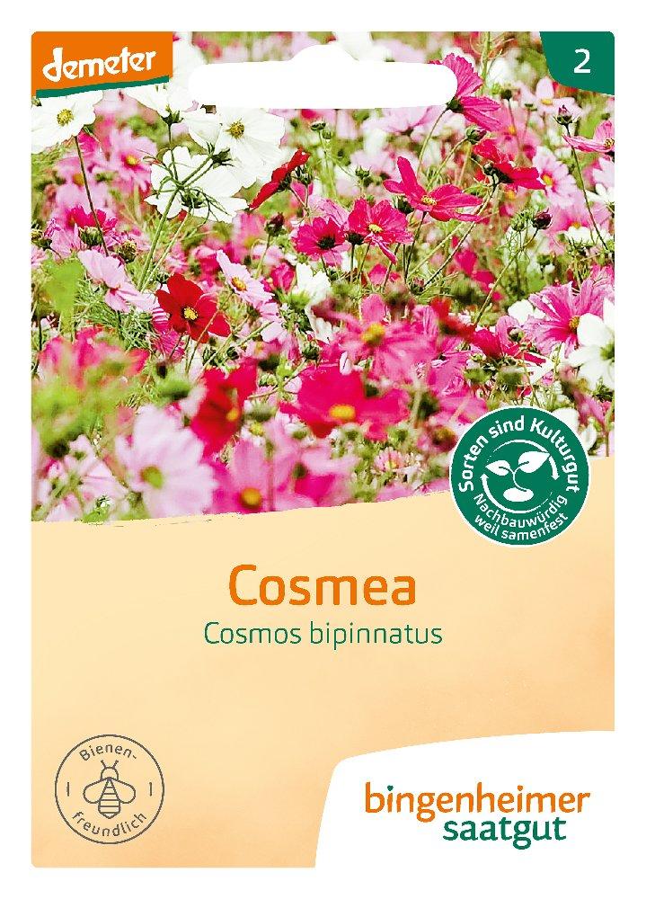Saatgut Cosmea -B-