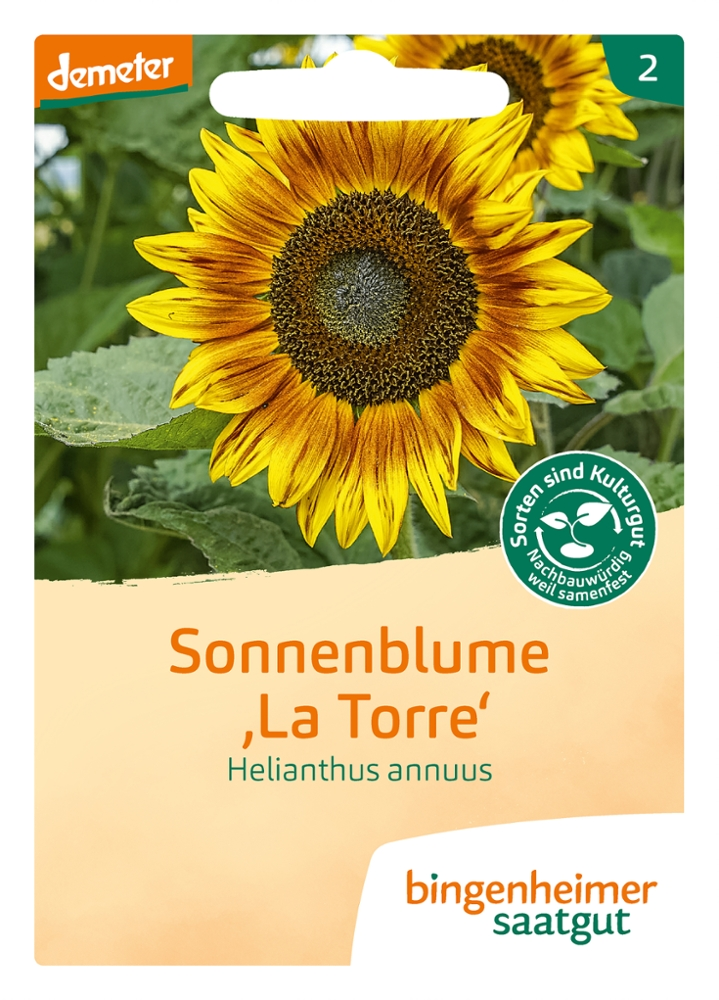 Saatgut Sonnenblume La Torre -B-