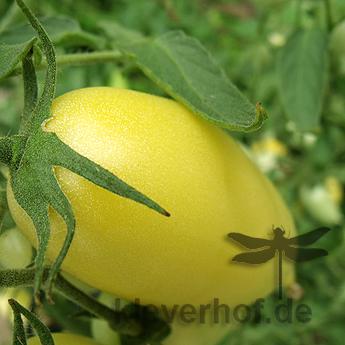 Gelb/Weiße Paradeiser