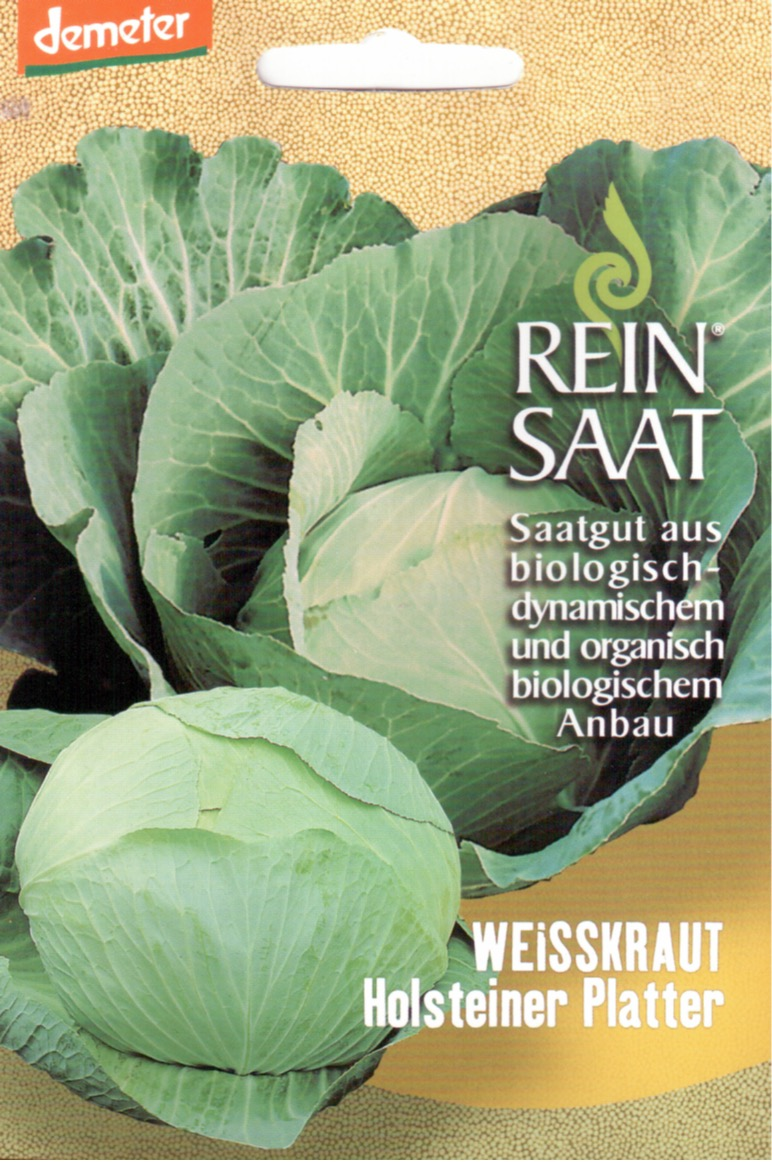 Saatgut Weisskohl Holsteiner Platter -R-