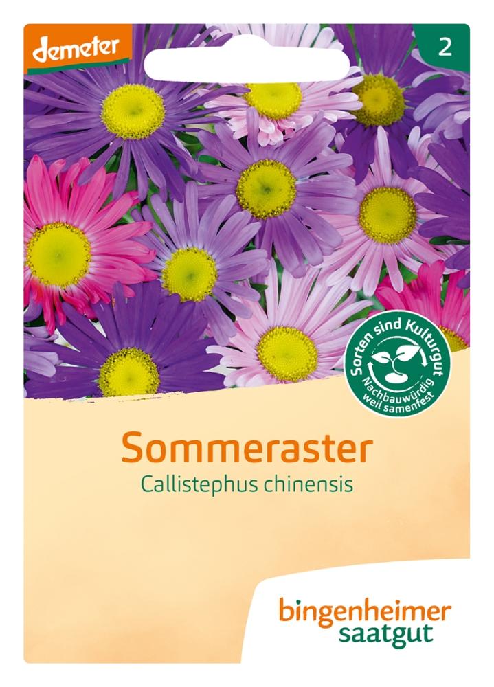 Saatgut Sommeraster -B-