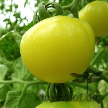 Weiße und Gelbe Tomatenfrucht