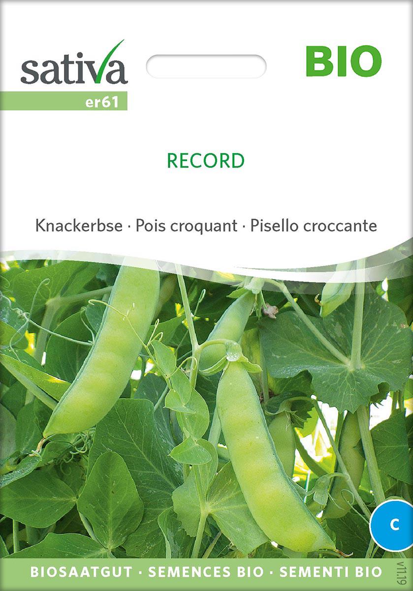 Saatgut Knackerbse Record -S-
