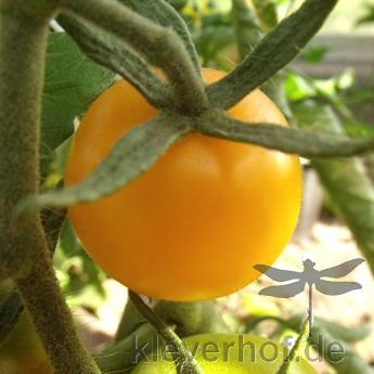 Gelbe Cherry Paradeiser