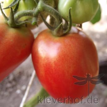 Braune und Rote Tomatensorte mitGeschmack