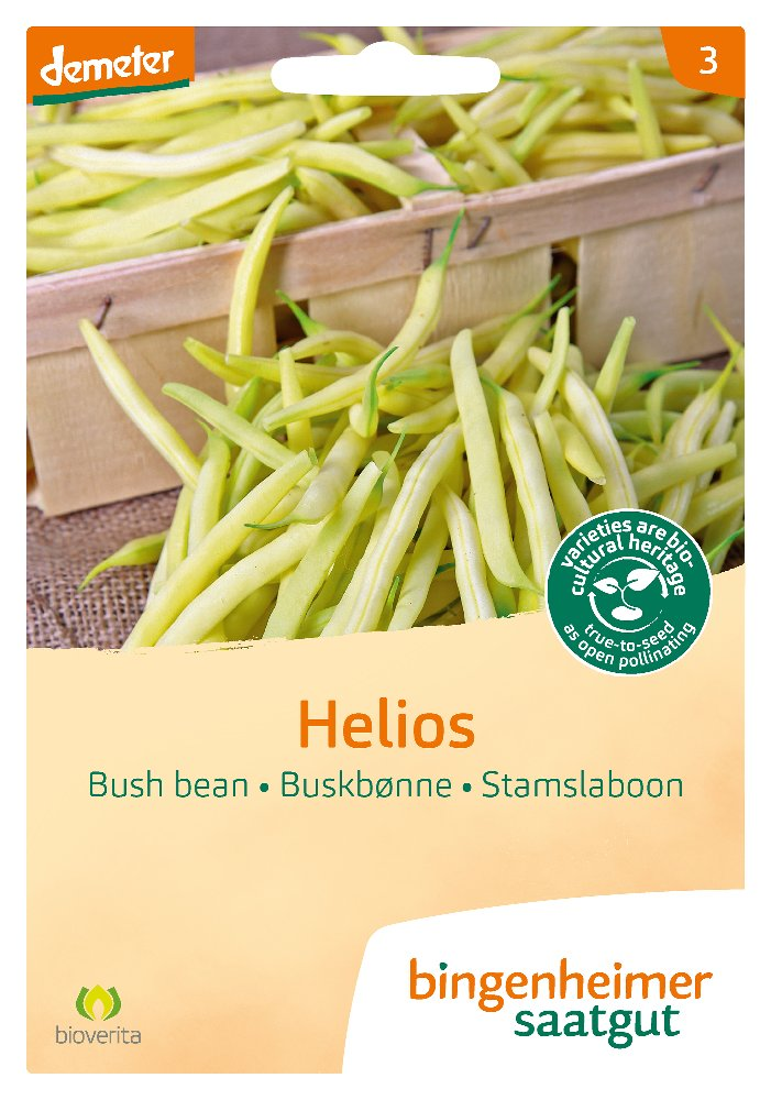 Saatgut Buschbohne Helios -B-